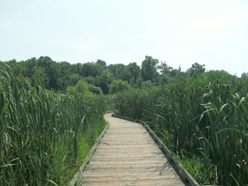 Huntley Meadows accessible trail